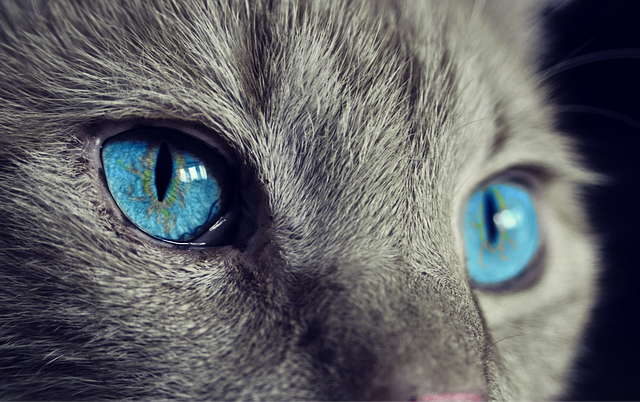 Katzen können ungewöhnlich alt werden. Vor allem wenn man das Alter in Katzenjahre umrechnet.