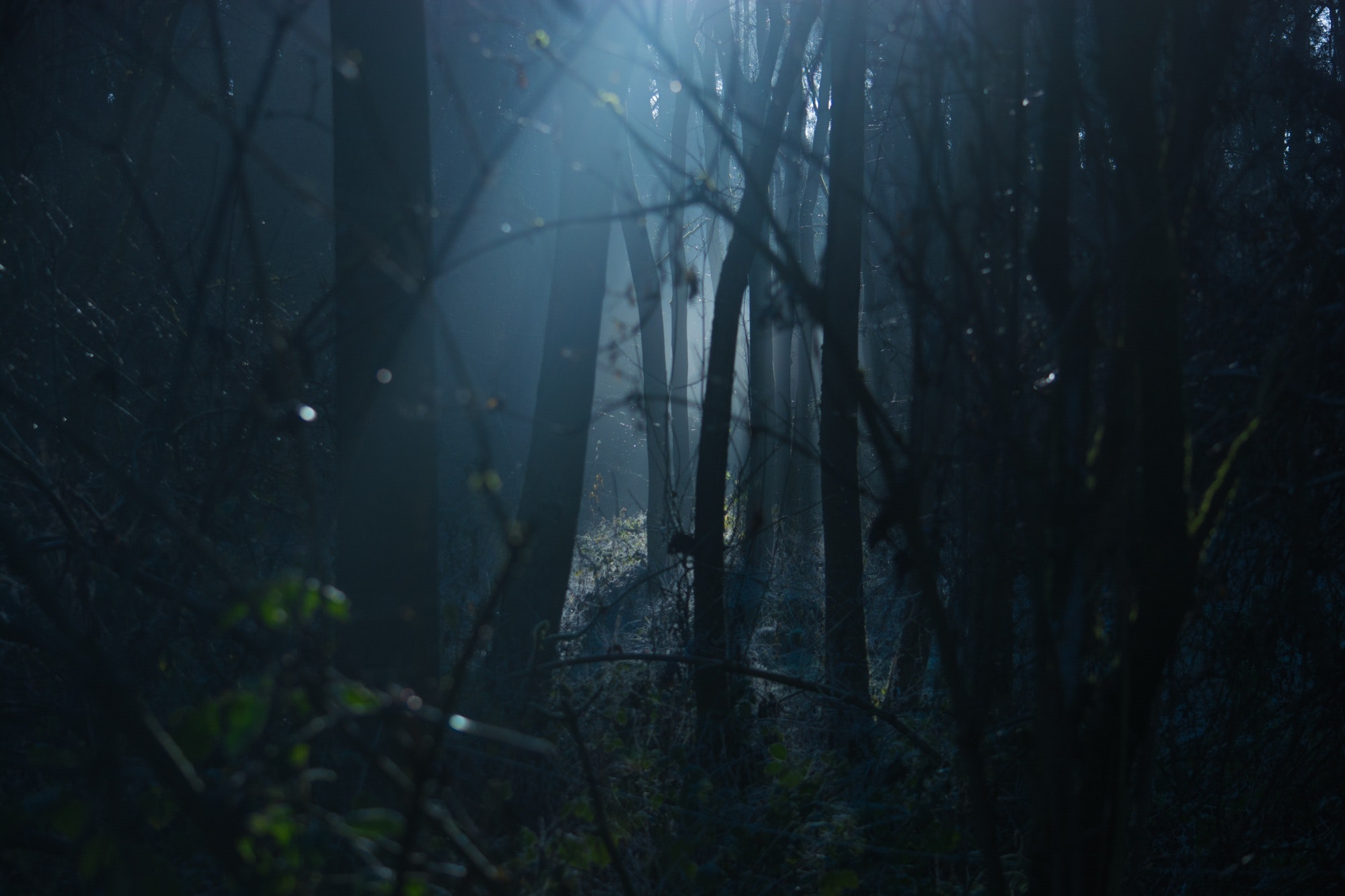 Ein dunkler Wald bietet immer ein ordentliches Szenario für einen Horrorfilm.